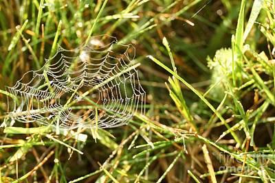 Photograph - Spider Web In Grass by Kerri Mortenson