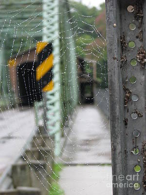 Spider Web Art Print by Michael Krek