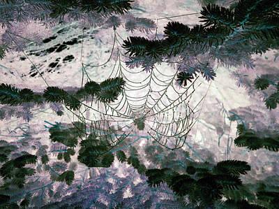 Photograph - Spider Web by Patricia Januszkiewicz