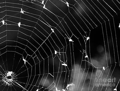 Wall Art - Photograph - Spider Web by Susan Montgomery