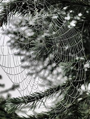 Photograph - Spider Web With Dew Drops by Patricia Januszkiewicz