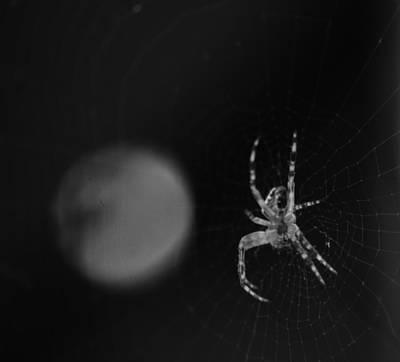 Photograph - Garden Orb Spider - Bw by Marilyn Wilson