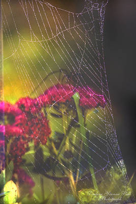 Photograph - Spiders Joy by Darlene Bell