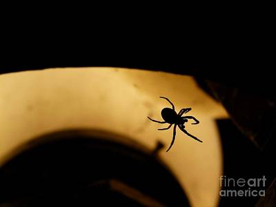Photograph - Spider's Silhouette by Jane Ford
