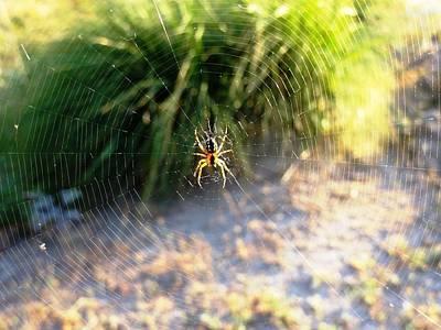 Photograph - Spider's Web by Faouzi Taleb