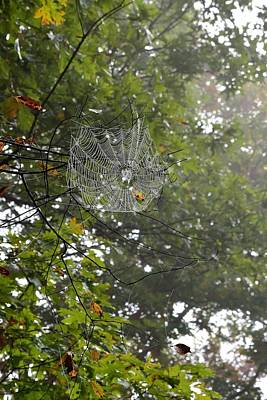 Rowing - Spiders Webs 24 by Lawrence Hess