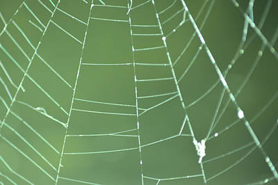 Photograph - Spiderweb 3 by Brent Dolliver