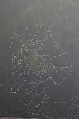Spiderweb Art Print by Allan Morrison