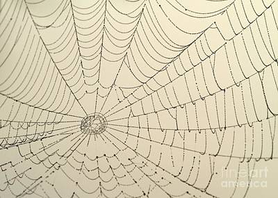 Photograph - Spiderweb At Dawn by Sabrina L Ryan