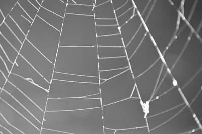 Photograph - Spiderweb Bw by Brent Dolliver