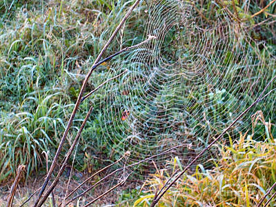 Photograph - Spiderweb Exposed by Audrey Van Tassell