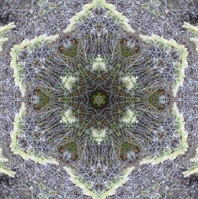 Digital Art - Spiderweb Pattern by Trina Stephenson