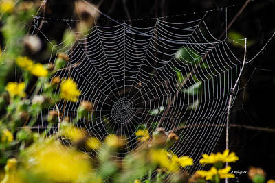 Photograph - Spiderweb With Dew 2 by Allen Sheffield
