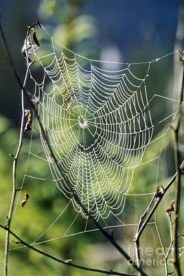 Designs In Nature Photograph - Spiderweb With Dew by Richard and Ellen Thane