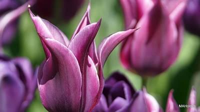 Spiked Tulips Original