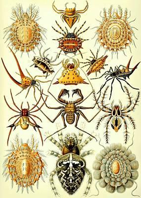 Arachnida Digital Art - Spin Arachnids Insect Haeckel Arachnida Araneae by Movie Poster Prints