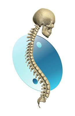 Yin And Yang Photograph - Spinal Balance by Harvinder Singh