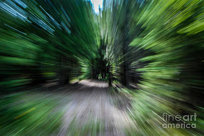 Photograph - Spinning Through The Woods by Grace Grogan