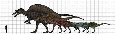 Spinosauridae Size Chart Art Print by Vitor Silva