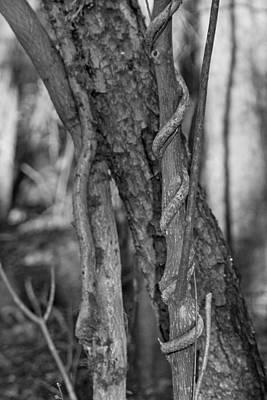 Virginia Photograph - Spiral Climber by Betsy Knapp