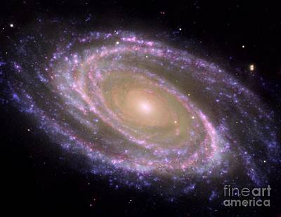 Photograph - Spiral Galaxy M81 by Rod Jones