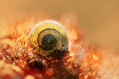 Photograph - Spiral House by Jaroslaw Blaminsky