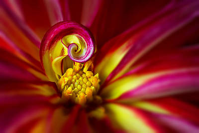 Bright Colors Photograph - Spiral by Mary Jo Allen