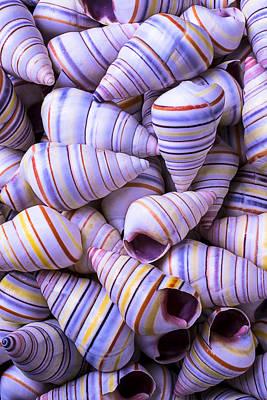 Spiral Photograph - Spiral Sea Shells by Garry Gay