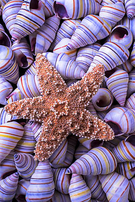 Spiral Shells And Starfish Art Print by Garry Gay