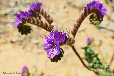 Photograph - Spirals Of Lavender by Rebecca Christine Cardenas