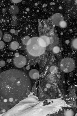 Photograph - Spirit Bear by Sue Smith