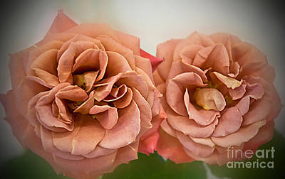 Photograph - Spirit Dance Roses Art Prints by Valerie Garner