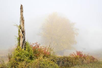Photograph - Spirit Deer Totem by John Poon