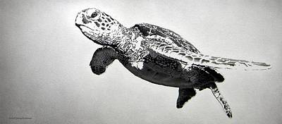 Green Sea Turtle Drawing - Spirit Drifter by Doug Comeau