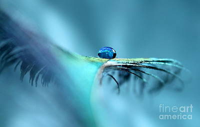 Nature Abstract Photograph - Spirit Feather by Krissy Katsimbras