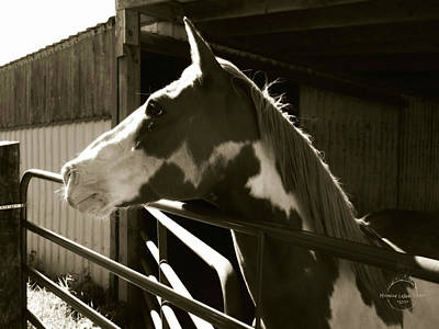 Photograph - Spirit Of A Horse by Absinthe Art By Michelle LeAnn Scott