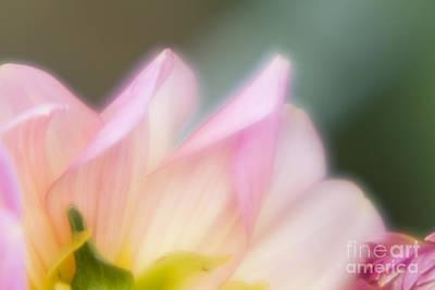 Photograph - Spirit Of Flower by Tad Kanazaki