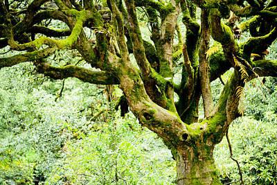 Power Photograph - Spirit Of Forest by Raimond Klavins