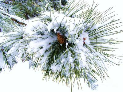 Art Print featuring the photograph Spirit Of Pine by Margie Amberge