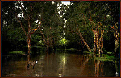 Photograph - Spirit Pony In Flooded Mangrove by Wayne King