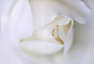 Photograph - Spirit White Rose Flower Macro by Jennie Marie Schell