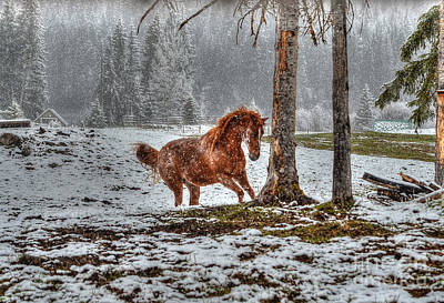 Red Dun Horse Photograph - Spirited Dun In Winter by Skye Ryan-Evans