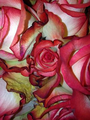 Spirited Rose  Art Print