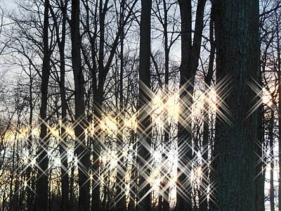 Spirits In The Woods Art Print by Sharon Costa