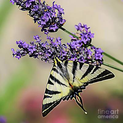 Nikki Vig Royalty-Free and Rights-Managed Images - Spiritual Circle of Life - Butterfly by Nikki Vig
