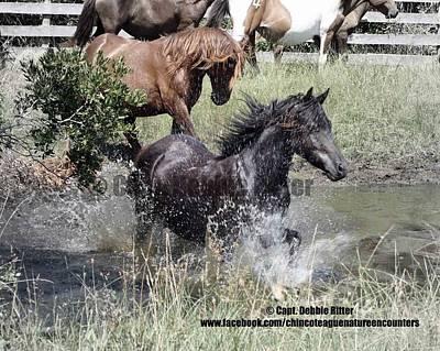 Photograph - Splash by Captain Debbie Ritter