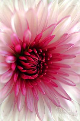 Splash Of Pink Art Print