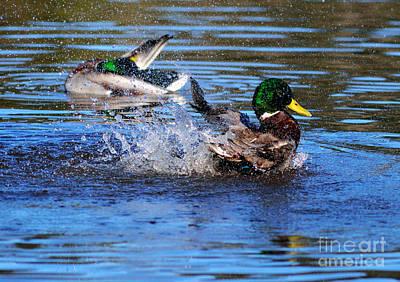 Photograph - Splash Time by Terry Elniski