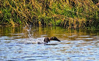 Splashing Start Cormorant Beginning To Fly From Water In Creek Of Enkoeping Enkoping Swe Art Print