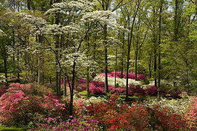 Photograph - Splendor - Azalea Garden by Jane Eleanor Nicholas